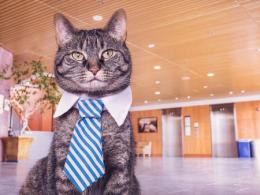 Cat wearing tie in office building.