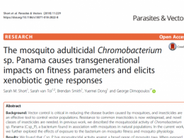 The mosquito adulticidal Chromobacterium sp. Panama causes transgenerational impacts on fitness parameters and elicits xenobiotic gene responses